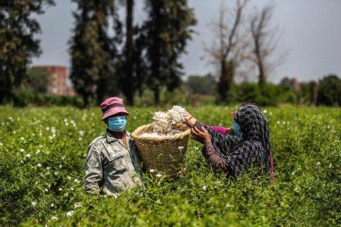 Hunvandhu maa export kohgen misrah aharaku 6 million doller